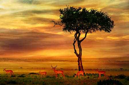 and south: Impala at African Sunset Background