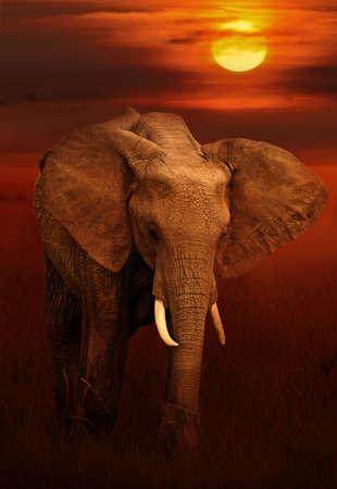 a big family: Elephant in masai mara national park, Kenya