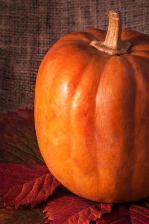 matting: Pumpkin with autumn leaves on matting background