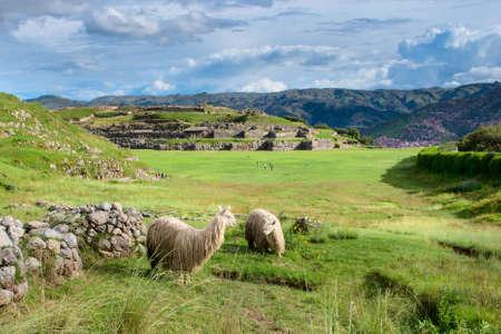 urubamba valley: Lama at Sacsayhuaman in Cuzco, Peru.