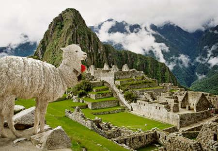 Lama in Machu Picchu, Peru. 스톡 콘텐츠