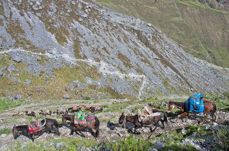 salkantay: Horses in Andes. Salkantay Trekking, Peru. Stock Photo