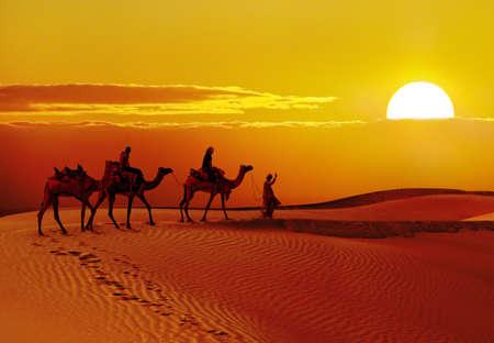 jaisalmer: Beautiful sunset  with camels silhouettes in dunes at  desert , Jaisalmer,India