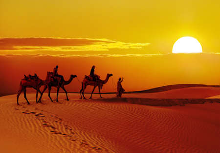 Beautiful sunset  with camels silhouettes in dunes at  desert , Jaisalmer,India