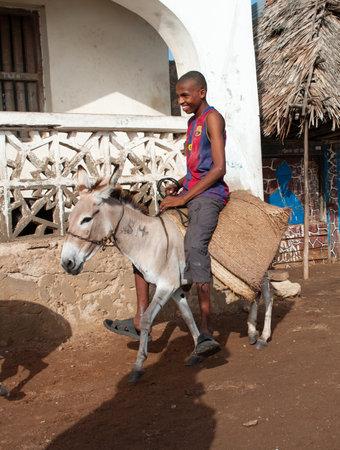 cartage: LAMU, KENYA - 19 JAN: Locals using a donkey for transport in Lamu on Jan 19, 2013. Editorial