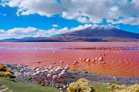 laguna: Flamingoes in Laguna Colorada , Uyuni, Bolivia Stock Photo