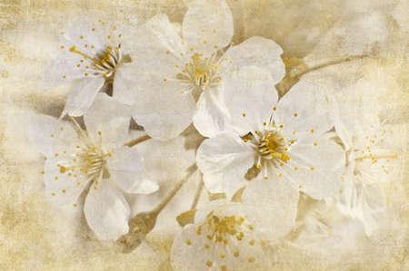 vintage postcard: postcard of spring bloom, vintage effect Stock Photo