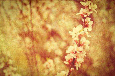 to bloom: postcard of spring bloom, vintage effect Stock Photo