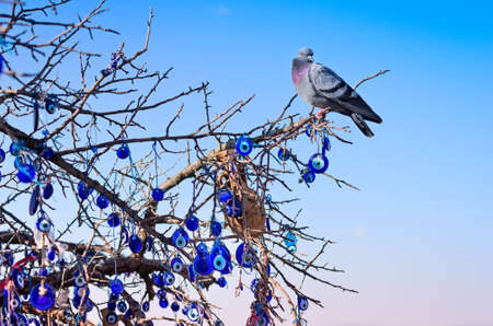 charms: A nazar, charms to ward off the evil eye , on the branches of a tree in Cappadocia, Turkey