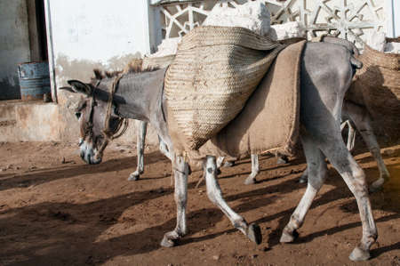 Locals using a donkey for transport in Lamu, Kenya Stock Photo