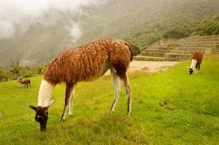 archaeologies: Machu Picchu in Peru.