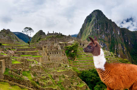 Lama in ancient city of Machu Picchu, Peru. Stock Photo