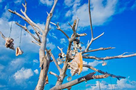 talisman: Árbol con talismanes contra el cielo azul, Isla Mujeres, México.