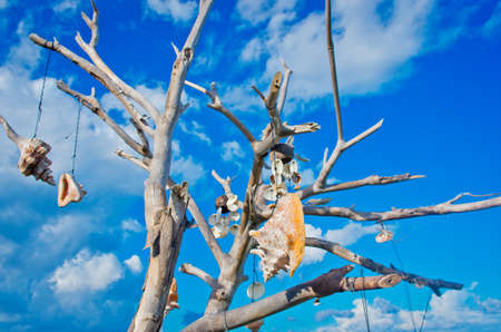 Tree with talismans against blue sky, Isla Mujeres, Mexico.