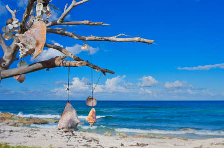 A dry tree with different talismans on the Caribbean coast, Isla Mujeres, Mexico. Stock Photo