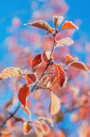 Frozen colorful autumn leaf. soft focus