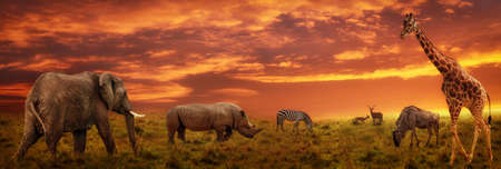 African sunset panoramic background with silhouette of the animals Stock Photo