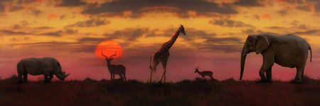 African sunset. Panoramic background with silhouette of the animals Stock Photo