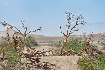 Paisaje de dunas de arena en el Valle de la Muerte, California, EE.