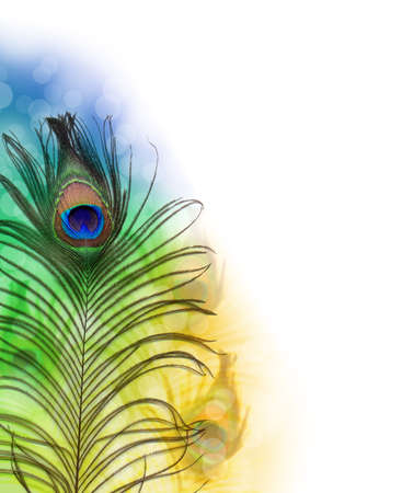 piuma di pavone: Bella piuma di pavone esotici Archivio Fotografico