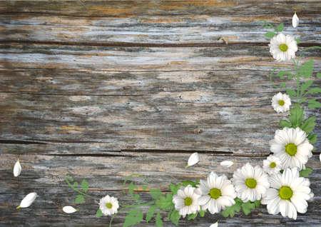 Wood background with chamomile photo