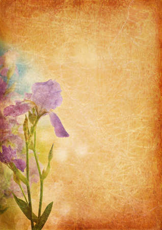 Vintage background with iris photo