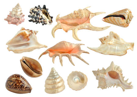 Set of sea shells isolated on the white Stock Photo - 16279073
