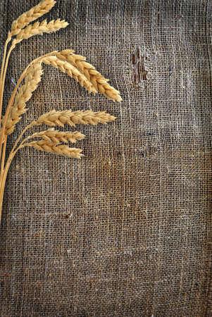 beardless: Stalks of wheat ears on the sacking