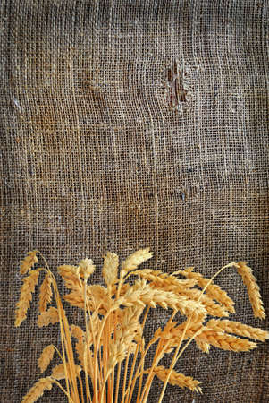 Stalks of wheat ears on the sacking photo