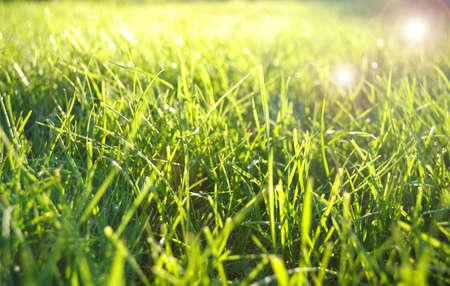 与透镜耀斑效果的绿草领域