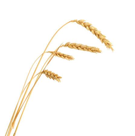 beardless: Stalks of wheat ears isolated on white background