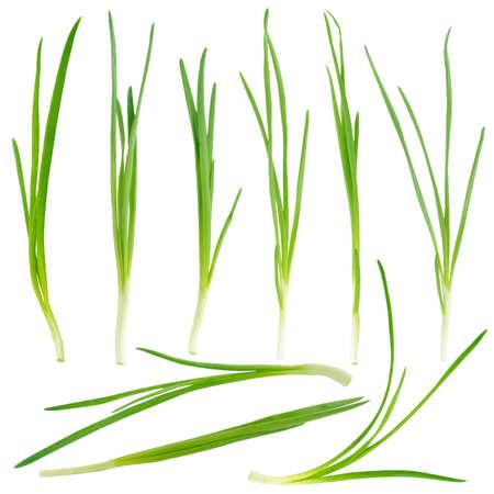 cebollin: Cebolla verde joven conjunto aislado sobre fondo blanco
