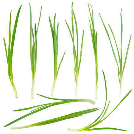 Young green onion set isolated on white background