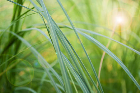 leans: Abstract grass background with leans flare