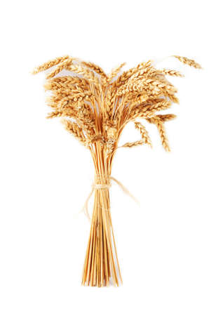 Stalks of wheat ears isolated on white background photo