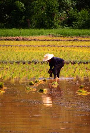 cultivate: Farmers to cultivate.