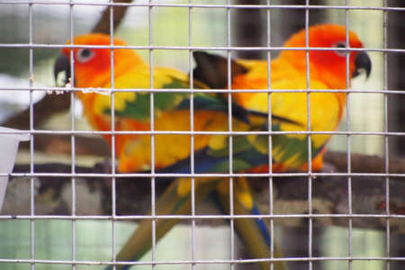 love bird in a cage photo
