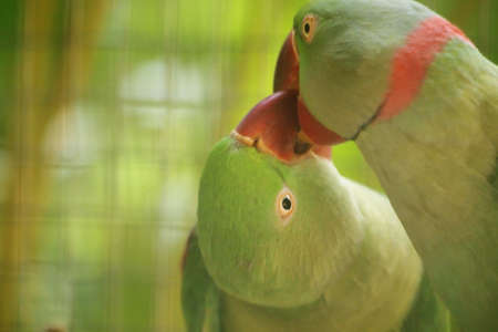 love bird Stock Photo - 11670788