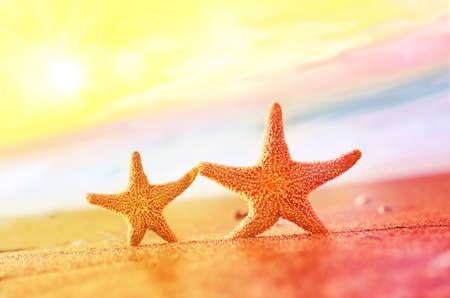 stella marina: Spiaggia estiva. Due stelle marine. Archivio Fotografico