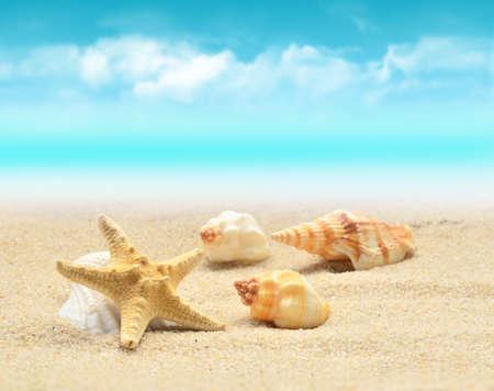 Summer beach. Starfish and seashell on the sand. Foto de archivo