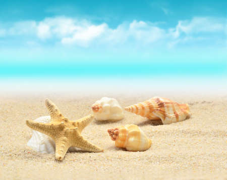 in the summer: Summer beach. Starfish and seashell on the sand. Stock Photo