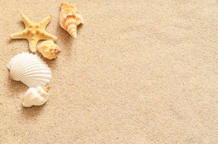海岸と夏のビーチでヒトデ