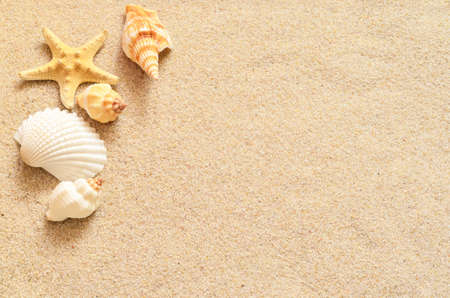 shell: Starfish on the seashore and summer beach