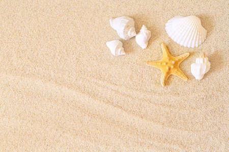 Zeester op het strand en in de zomer het strand