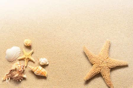 estrella de mar: Playa de verano. Estrellas de mar y conchas marinas en la arena. Foto de archivo