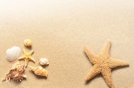 stella marina: Summer beach. Stelle marine e conchiglie sulla sabbia.
