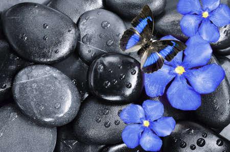 Blauwe Bloem, vlinder en zwarte stenen Stockfoto