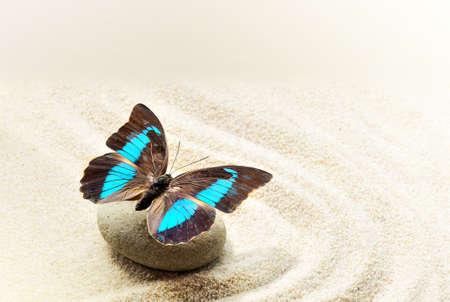 모래에 나비 Prepona Laerte 스톡 콘텐츠
