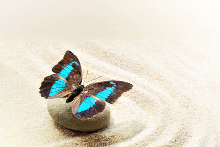 zen rocks: Butterfly Prepona Laerte on the sand Stock Photo