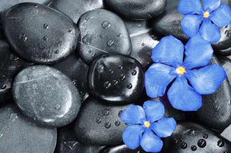 mojada: Flor y piedras Foto de archivo